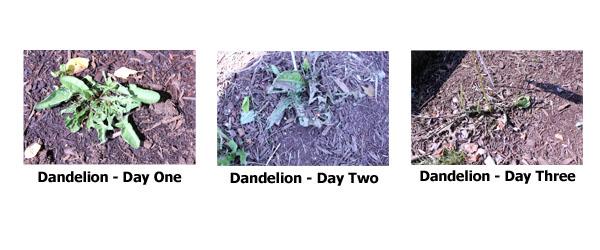 DandelionTest