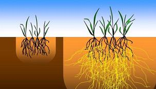 Without and With Mycorrhizae