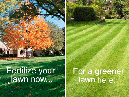 Fertilizer your lawn this fall for Success next Spring