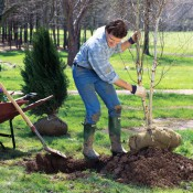 treeplanting_032213_GZ_tif_