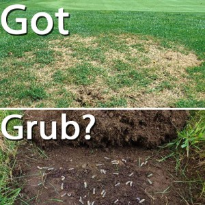 How to Kill Grubs