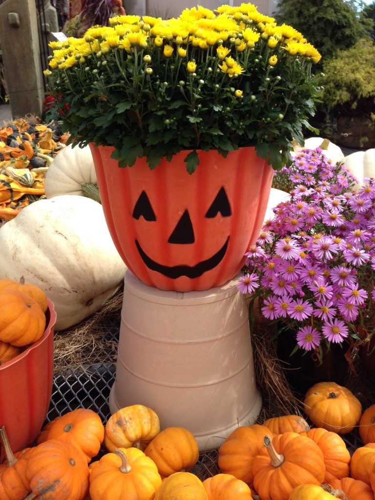 Pumpkin Face Planter