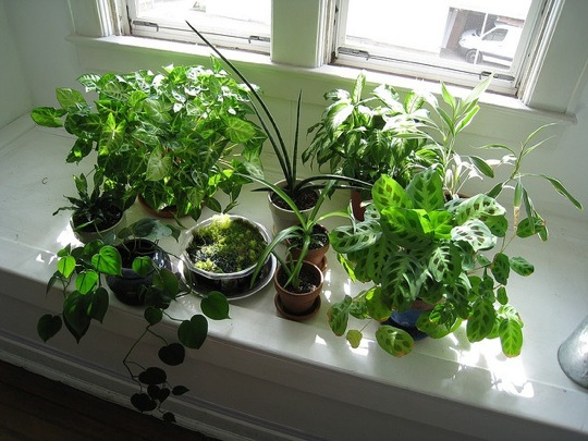 The care and feeding of your houseplants - Houseplants thrive low light youre window sill ...