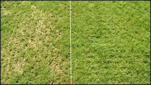Spring Grass Seeding for the Lazy Fall Gardener: 10 Steps for Repairing Patchy Lawns