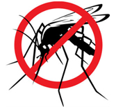 Ways to Control Mosquitoes in Your Yard