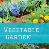 6 tips for a veggie garden