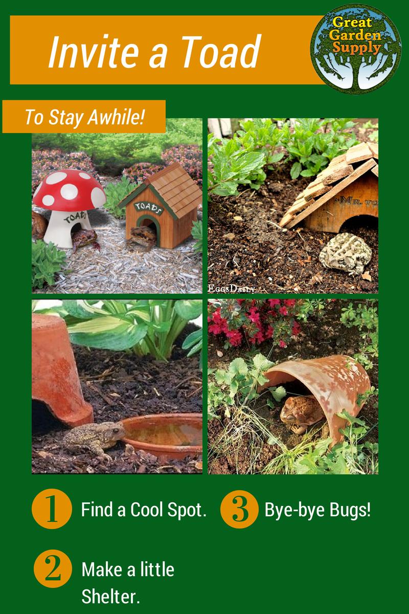 Toads In My Garden