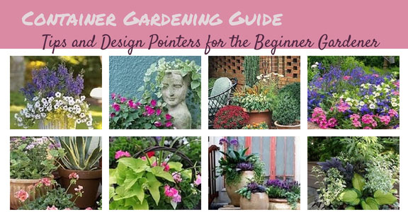 Container Gardening Guide Tips and Design Pointers for the Beginner
