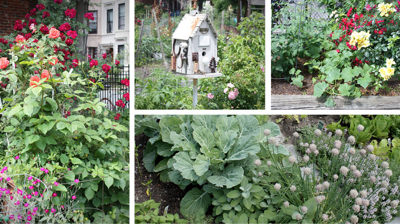 Companion Planting in City Gardens