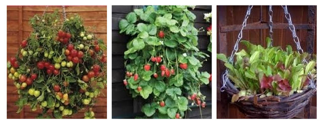 Creative Container Garden Ideas - Hanging Container Gardens