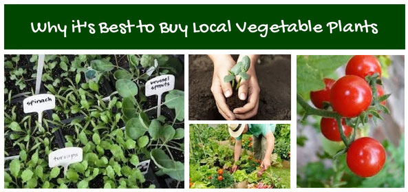 Why it's Best to Buy Local Vegetables