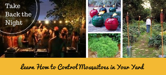 Learn How to Control Mosquitoes in Your Yard