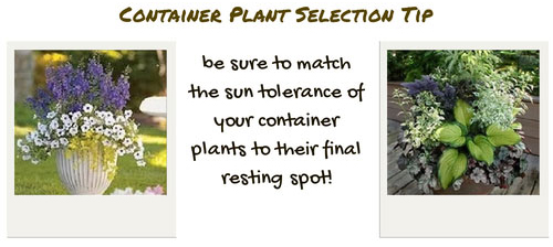 Container Gardening Tip - Selecting Your Plants