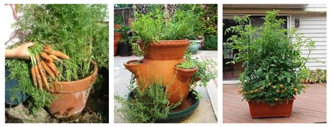 Creative Container Garden Ideas - Growing Food in Container Gardens