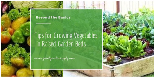 Tips for Growing Vegetables in Raised Garden Beds
