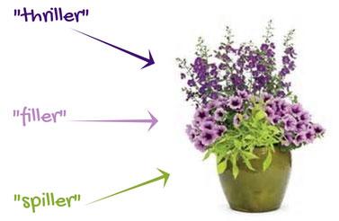 Design Tips for Beginner Container Gardening