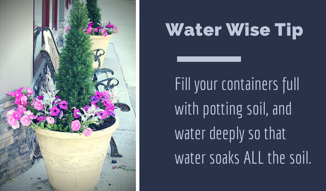 Water Wise Container Gardening Tip