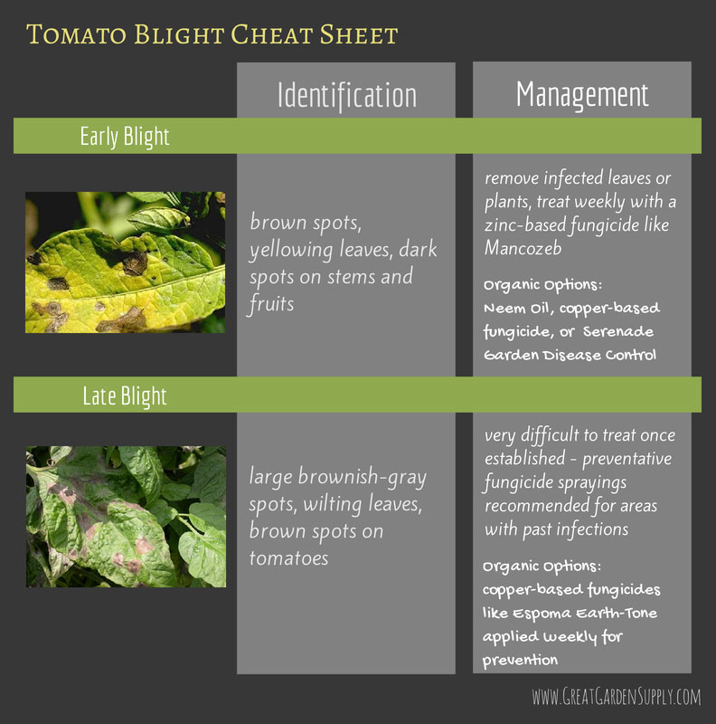 tomato blight cheat sheet - summer garden diseases