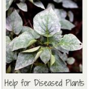 garden-diseases