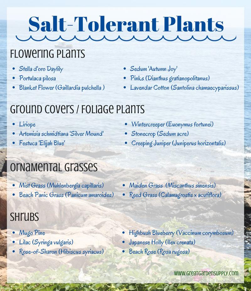 Salt Tolerant Plants for Seaside Gardening